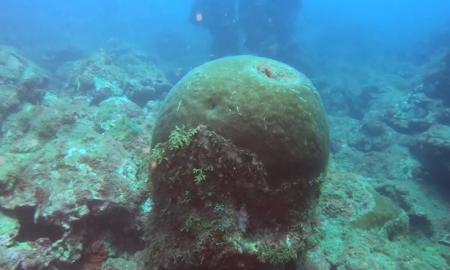 arrecifecora