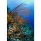 coralesbelize