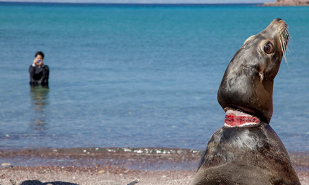 Horribles heridas sufren animales por mallas de pesca
