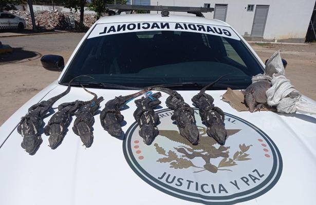 iguanasoax