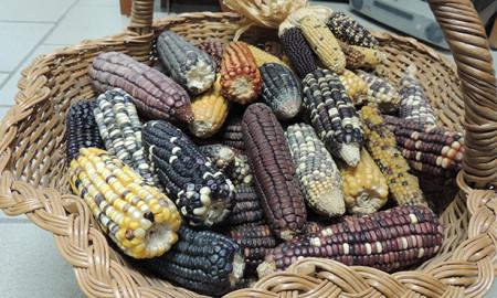 maiz-pinole