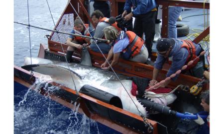 tiburonpesca