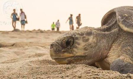 tortuga-conabio